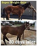 Horse Guard Super Weight Gain Equine Vitamin