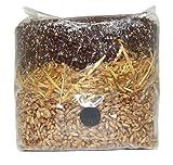 All in One Mushroom Grow Bag