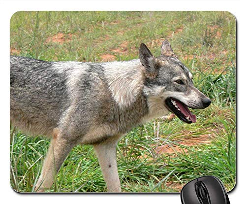 Threats Gray Wolf - Mouse Pad - Wolf Wild Mammal Grey Canine Fur Danger