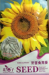 Heirloom Edible White Long Sunflower Seeds, Original Pack, 20 Seeds / Pack, Tasty Seeds Ornamental Flowers #A277
