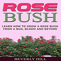 Rose Bush: Learn How to Grow a Rose Bush from a Bud, Bloom or Beyond
