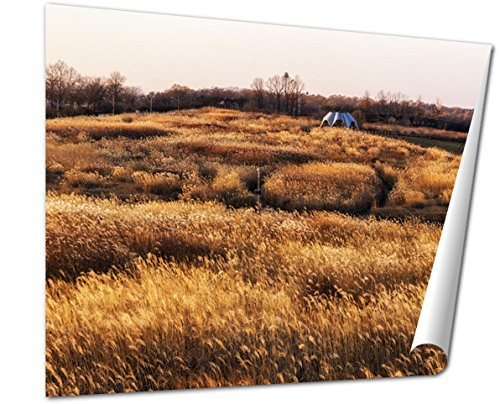 Ashley Giclee, Wild Reeds In Haneul Park - Eulalia Grass Shopping Results