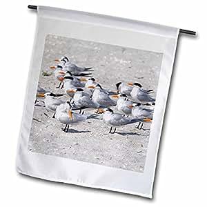 Danita Delimont - Birds - Royal Tern birds, Sanibel Island, Florida - US10 DFR0161 - David R. Frazier - 18 x 27 inch Garden Flag (fl_89072_2)