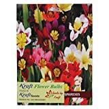 Kraft Seeds Sparexes or Sparaxis Flower Bulb Mix (Pack of 6)