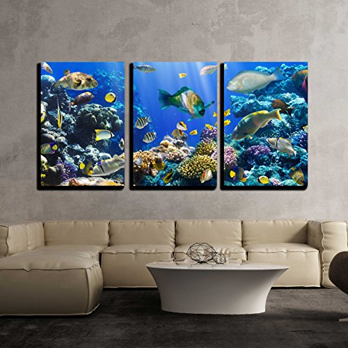 wall26 - 3 Piece Canvas Wall Art - Coral and Fish in the Red Sea Egypt - Modern Home Decor Stretched and Framed Ready to Hang - 16''x24''x3 Panels by wall26