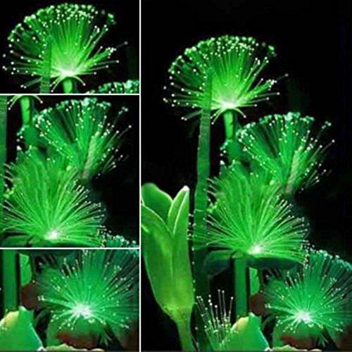 Seed Emerald - Wintefei 100Pcs Rare Emerald Fluorescent Flower Seeds Night Light Emitting Plants Garden