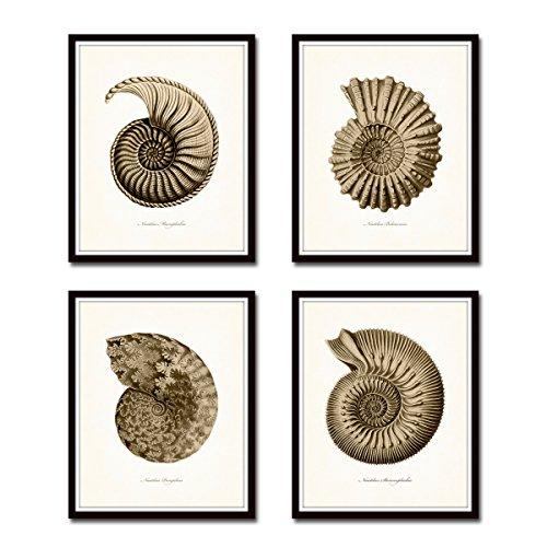 Paper Nautilus Shell - Sepia Nautilus Shells Print Set Giclee Fine Art Prints - Unframed