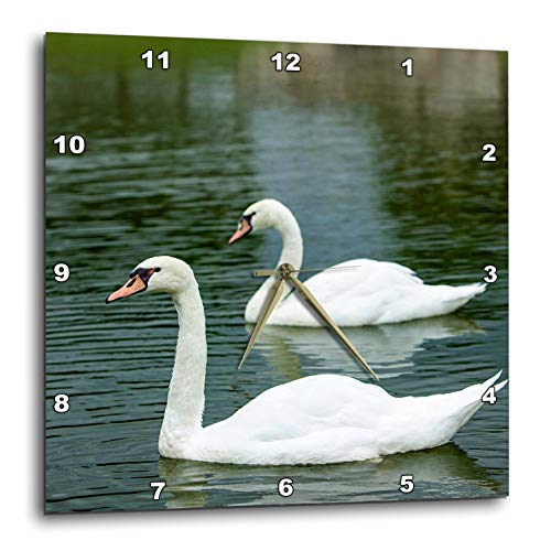 - 3dRose Danita Delimont - Swans - Swans in a Pond at Chateau Villandry Near Tours, Loire Valley, France - 15x15 Wall Clock (DPP_313105_3)