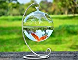 Hanging Glass Vase Fish Tank Transparent Spherical Fishbowl (white stand)