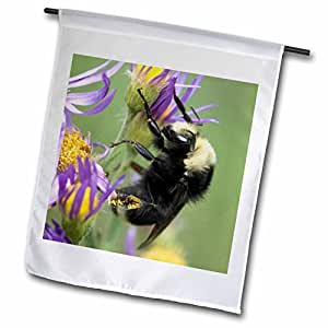 Danita Delimont - Bees - Bee pollinating. Sequoia and Kings Canyon NP, CA - US05 RKL0047 - Raymond Klass - 12 x 18 inch Garden Flag (fl_88623_1)