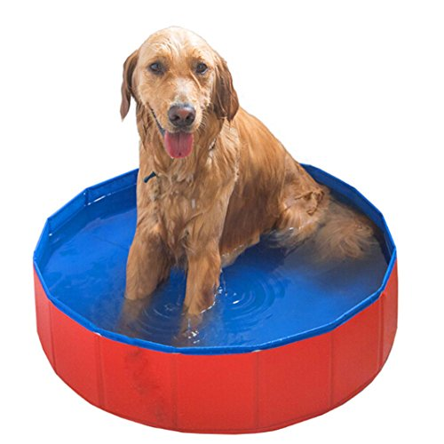 Foldable Large Dog Pet piscine Bathing Tub