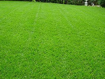 Rasen Berliner Tiergarten Grassamen Rasensamen Rasensaat Gras 25 Kg