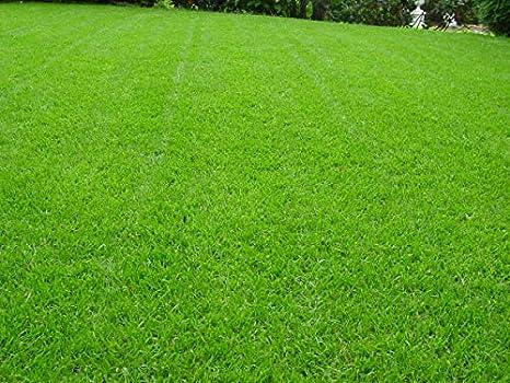 Rasensamen Berliner Tiergarten Grassamen Rasen Zierrasen Rasensaat Gras Qualität