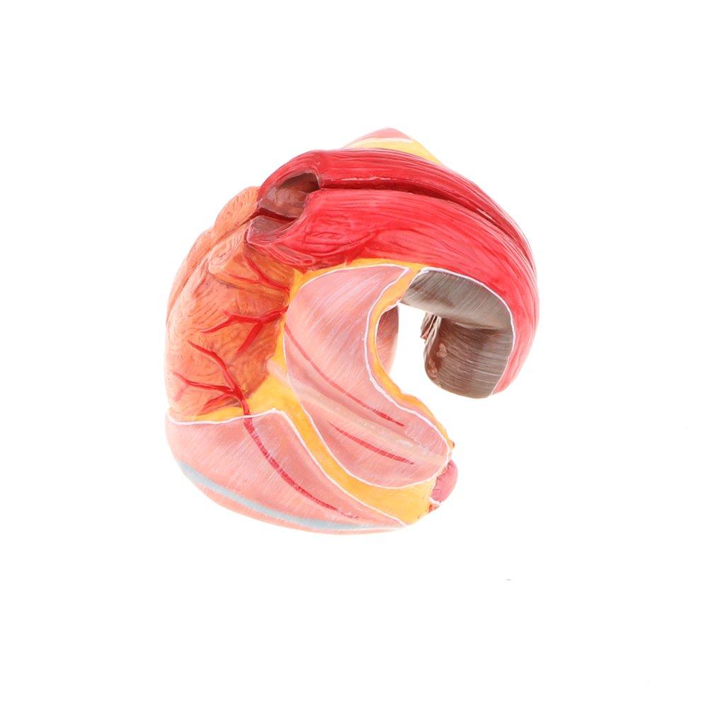 4 25x30cm SM SunniMix Premium Butcher Tray Medical Surgical Instrument Sterilization Tray Enamel