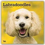 Labradoodles 2020 Calendar