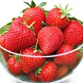 Organic Tristar Strawberry 315 Seeds UPC 600188194708 + 1 Free Plant Marker - Day Neutral - Excellent Flavor