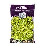 SuperMoss (21708) Reindeer Moss Preserved, Chartreuse, 2oz