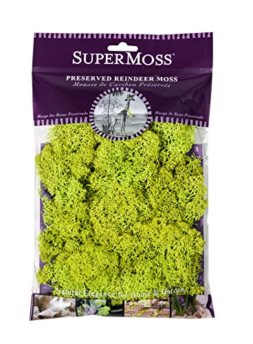 SuperMoss 21708 Moss Preserved Chartreuse product image