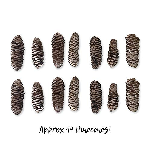 Banberry Designs Sugar Pine Cones – Set of 14 Large Pine Cones with a White-Washed Finish – Fall and Winter Decor by Banberry Designs (Image #1)