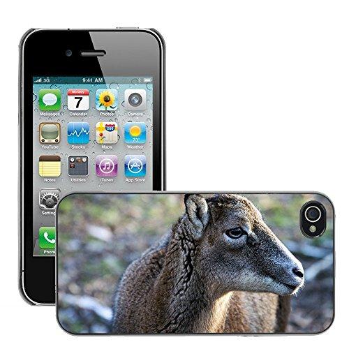 Bild Hart Handy Schwarz Schutz Case Cover Schale Etui // M00135486 Steinbock Wilde Tiere Weiblich // Apple iPhone 4 4S 4G