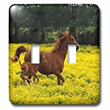3dRose lsp_80234_2 Arabian Mare And Foal Horses Double Toggle Switch