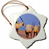 3dRose Arabian Oryx wildlife on Sir Bani Yas Island, UAE - AS44 MZW0004 - Martin Zwick - Snowflake Ornament, Porcelain, 3-inch (orn_133313_1)