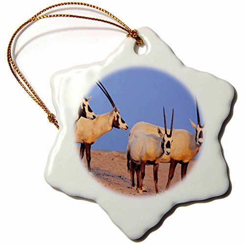 3dRose Arabian Oryx wildlife on Sir Bani Yas Island, UAE - AS44 MZW0004 - Martin Zwick - Snowflake Ornament, Porcelain, 3-inch (orn_133313_1) by 3dRose