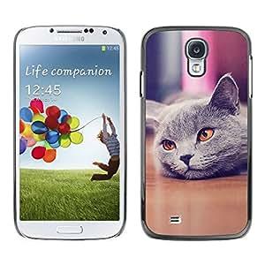 Carcasa Funda Prima Delgada SLIM Casa Case Bandera Cover Shell para Samsung Galaxy S4 I9500 / Business Style Cute Beautiful British Cat Shorthair