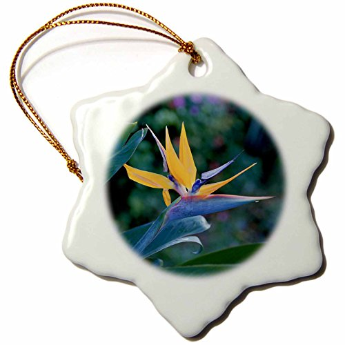 3dRose orn_89519_1 Bird of Paradise Flower, Hawaii US12 DPB0046 Douglas Peebles Snowflake Porcelain Ornament, 3-Inch by 3dRose