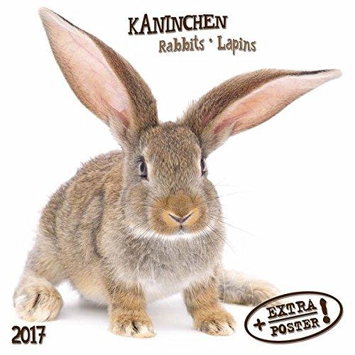 Rabbits/Kaninchen 2017: Kalender 2017 (Artwork Edition)