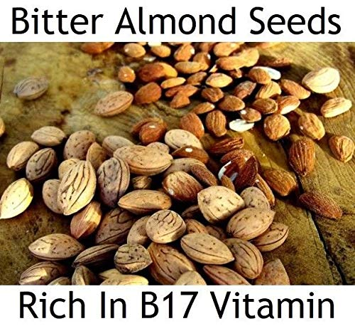 Portal Cool 50 Semillas: Las semillas de almendra amarga griegas - ricos en vitamina B17 ** ?nticancer Superalimentos: Amazon.es: Alimentación y bebidas