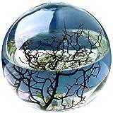 Ecosphere Kugel 10 cm mit LED Beleuchtung