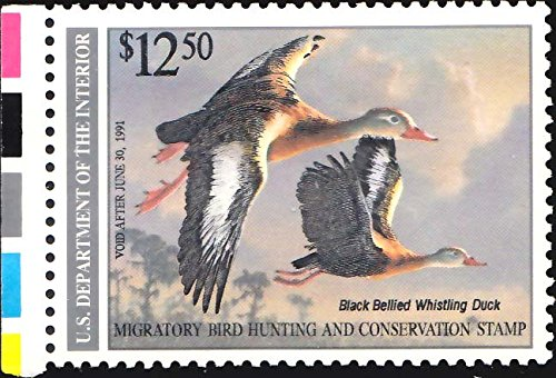 United States Scott RW57 $12.50 Black Bellied Whistling 1990 Migratory Bird Hunting Stamp. Mint never hinged.