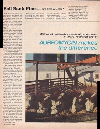 Aureomycin Feed Additive Beef Cattle Feedlot 2 Page 1968 Original Vintage Advertisement