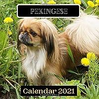 Pekingese Calendar 2021