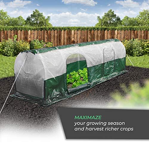 Bio Green SD300 Superdome Growtunnel, Garden Cl Length 9.8 x Width 2.3 ft, 2.6 x 2.3X 9.8', Transparent/Green by Bio Green (Image #6)