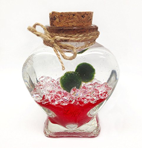 Luffy Marimo Ball Gift Set: Marimo Plant Symbolizes Love - Includes a Heart Shaped Bottle - Increase your Love with this small DIY project (packaging material included) - Perfect for someone Special