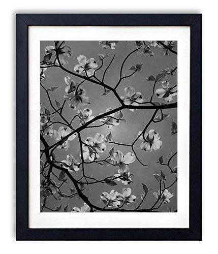 (SHADENOV Black Wood Framed Wall Art - Dogwood Flowering Branches Sky Beauty - Art Print Pictures For Wall Decoration 14x20 Inches Black and White)