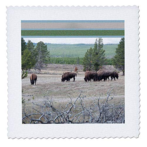 3dRose Jos Fauxtographee- Framed Top Bison Foraging - A Feild of Bison grazing on The Grass in Yellowstone with top Frame - 22x22 inch Quilt Square (qs_294261_9)