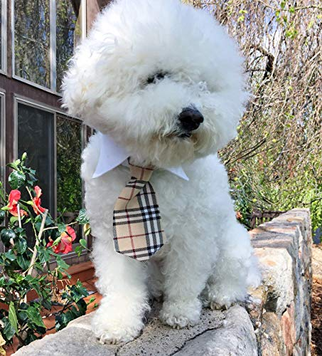 Furberry Nova Check NECK TIE and Straight Point White Cotton SHIRT COLLAR with CUSTOM FRENCH CUFFS OPTION in Designer British Tartan Tan Plaid for Male Dogs and Cats FREE SHIPPING