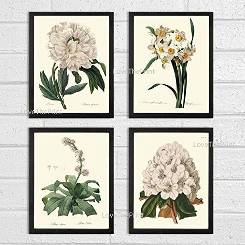 Botanical Print Set of 4 Antique Beautiful Redoute White Flowers Peony Narcissus Rhododendron Garden Nature Plants Home Room Decor Wall Art Unframed (Peony Pottery)