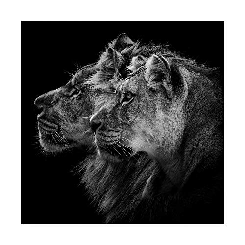 Trademark Fine Art Lion and Lioness Portrait by Laurent Lothare Dambreville, 14x14-Inch, 14x14, (Lioness Lion)