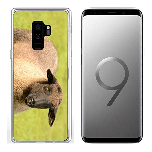 Samsung Galaxy S9 Plus Clear case Soft TPU Rubber Silicone Bumper Snap Cases IMAGE ID: 13208145 Suffolk lambs in a spring Oregon ()