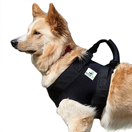 Nature Pet Pfaff Medical Dog Front Carrier Harness/Helping Harness for Elderly Dogs/Front Lifting Harness (L) (Best Canine Orthopedic Surgeons)
