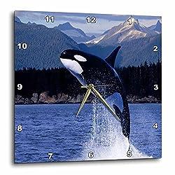 3dRose dpp_80247_1 Breeching Whale Off Alaska Coast Wall Clock, 10 by 10-Inch