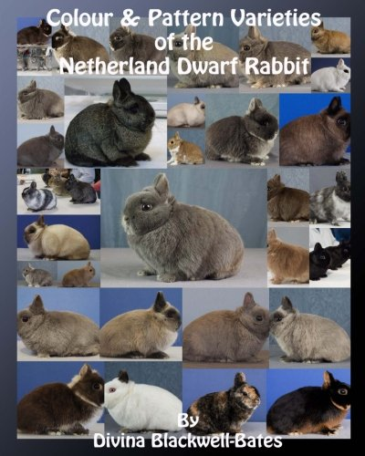 (Colour & Pattern Varieties of the Netherland Dwarf)