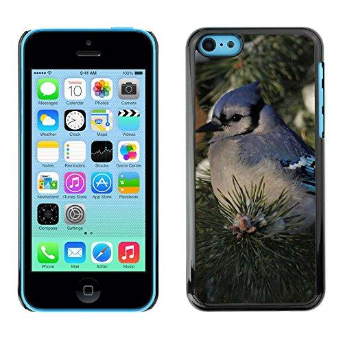 Premio Sottile Slim Cassa Custodia Case Cover Shell // F00002345 de plein air // Apple iPhone 5C