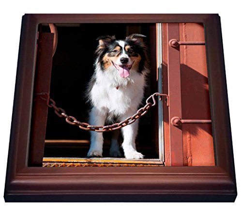 danita-delimont-dogs-australian-shepherd-in-a-train-car-8x8-trivet-with-6x6-ceramic-tile-trv-230324-