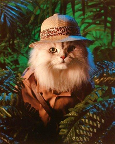 Safari Cat Cute Funny Kittens Animal Art Print Poster  16X20