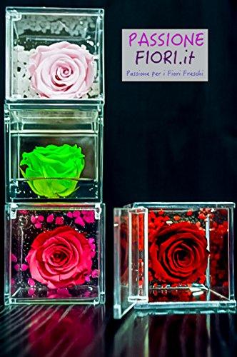 Cubo Rose Stabilizzate Blu Premium-Rose.com